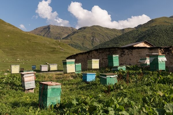 Beehives at the monastery