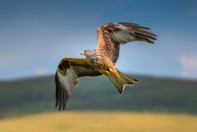 Carmarthenshire photo spots - Red Kite Feeding Station