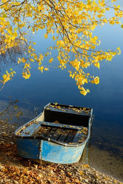 Lake Cerknica - Boats and Trees