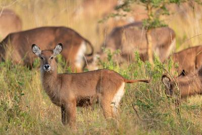 photography locations in Uganda - Lake Mburo NP - Game Drive