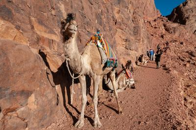 photography locations in Egypt - Mount Sinai - The Camel Trail