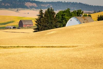 Palouse photo guide - Berger Road Barn View