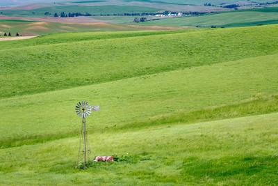 Palouse photography guide - File Road Windmill