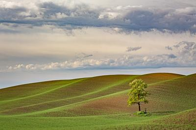 Palouse photography locations - Bald Butte Road Lone Tree