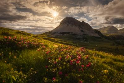 Passo Rolle – Flowers