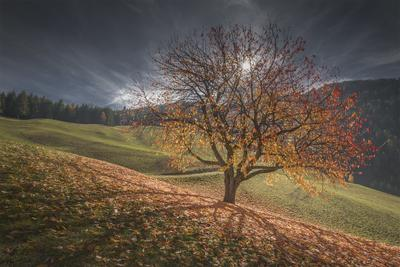 Alto Adige photo locations - Val di Funes - Cherry Tree