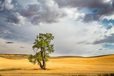 United States photography locations - May Road Lone Tree