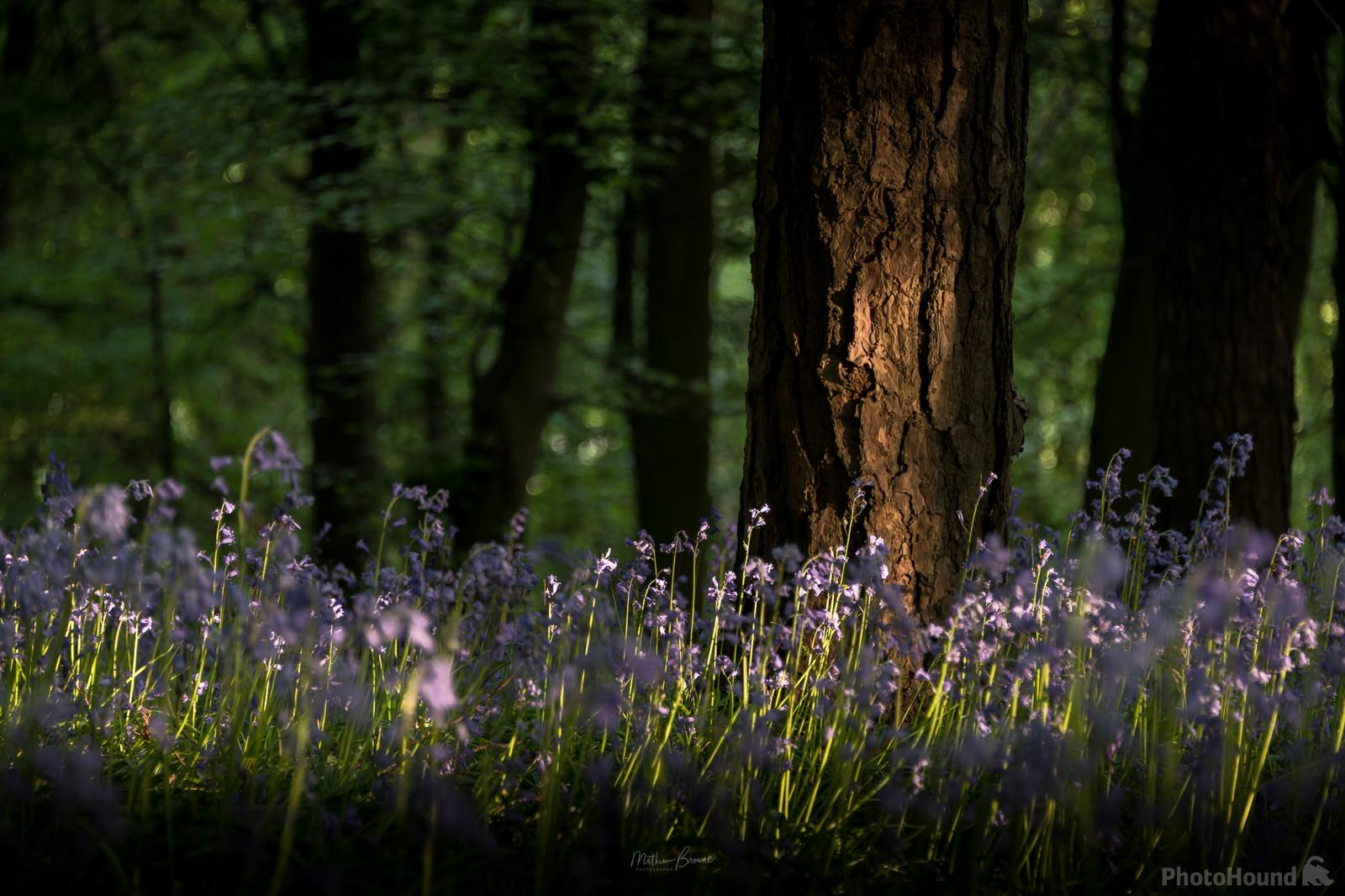 A low angle shot of the bluebells in spring.