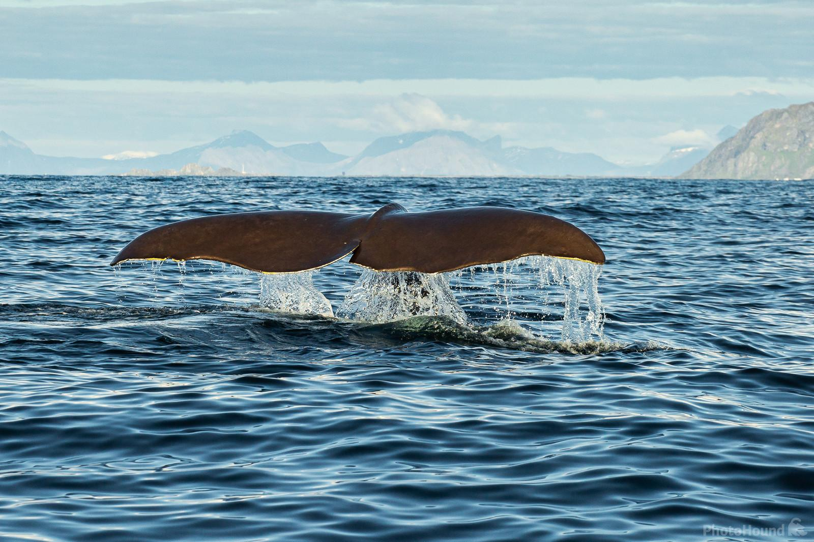 Sperm Whale photography