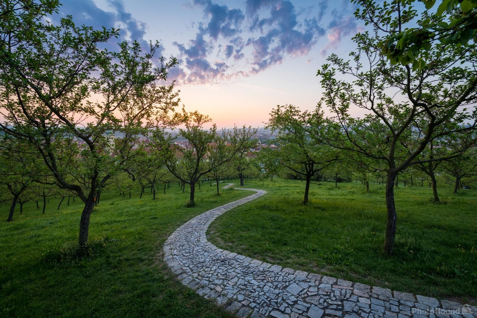 Winding path at the Petrin hill before the sunrise