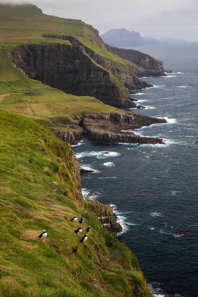 pictures of Faroe Islands - mykines Island