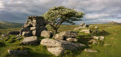 Mayflower on the Hawthorn at Emsworthy Rocks, Looking north east in late May