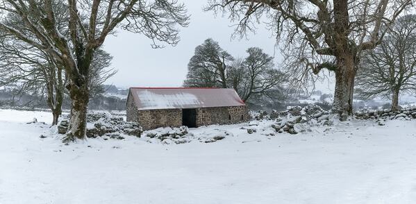 Emworthy barn and bluebells looking north from the paddock early morning in mid winter after fresh snow fall.