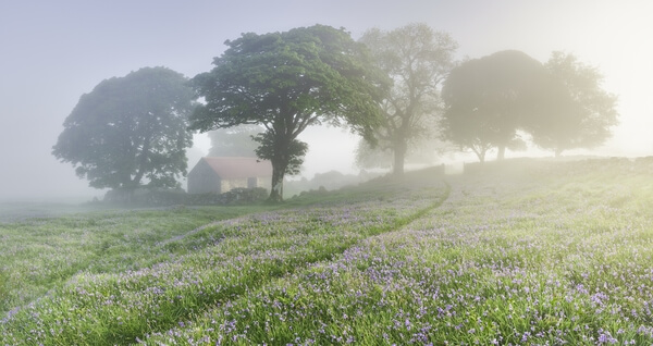 Emworthy barn and bluebells looking east from the paddock early morning in May after an inversion.