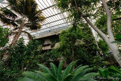 pictures of London - Barbican Conservatory