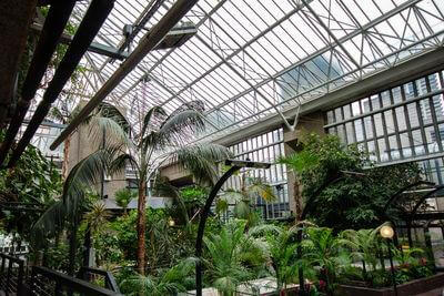images of London - Barbican Conservatory