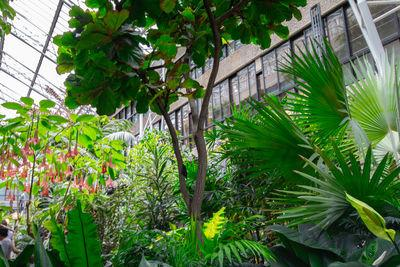 photos of London - Barbican Conservatory