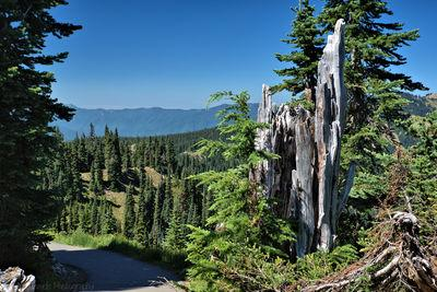 images of Olympic National Park - Hurricane Ridge