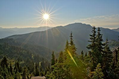 photos of Olympic National Park - Hurricane Ridge