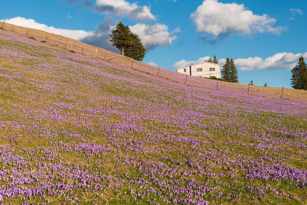 Spring has arrived at Mala Planina