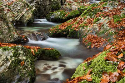images of Triglav National Park - Water Hurst of Šunik
