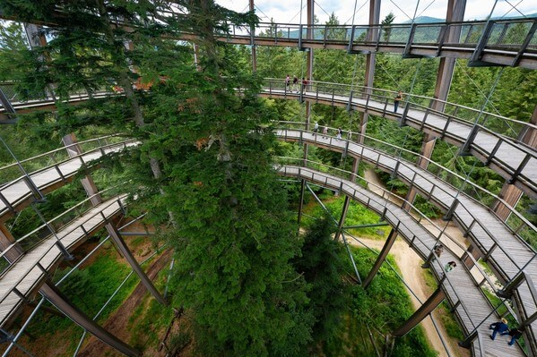 Treetop walk - the observation tower as seen from inside