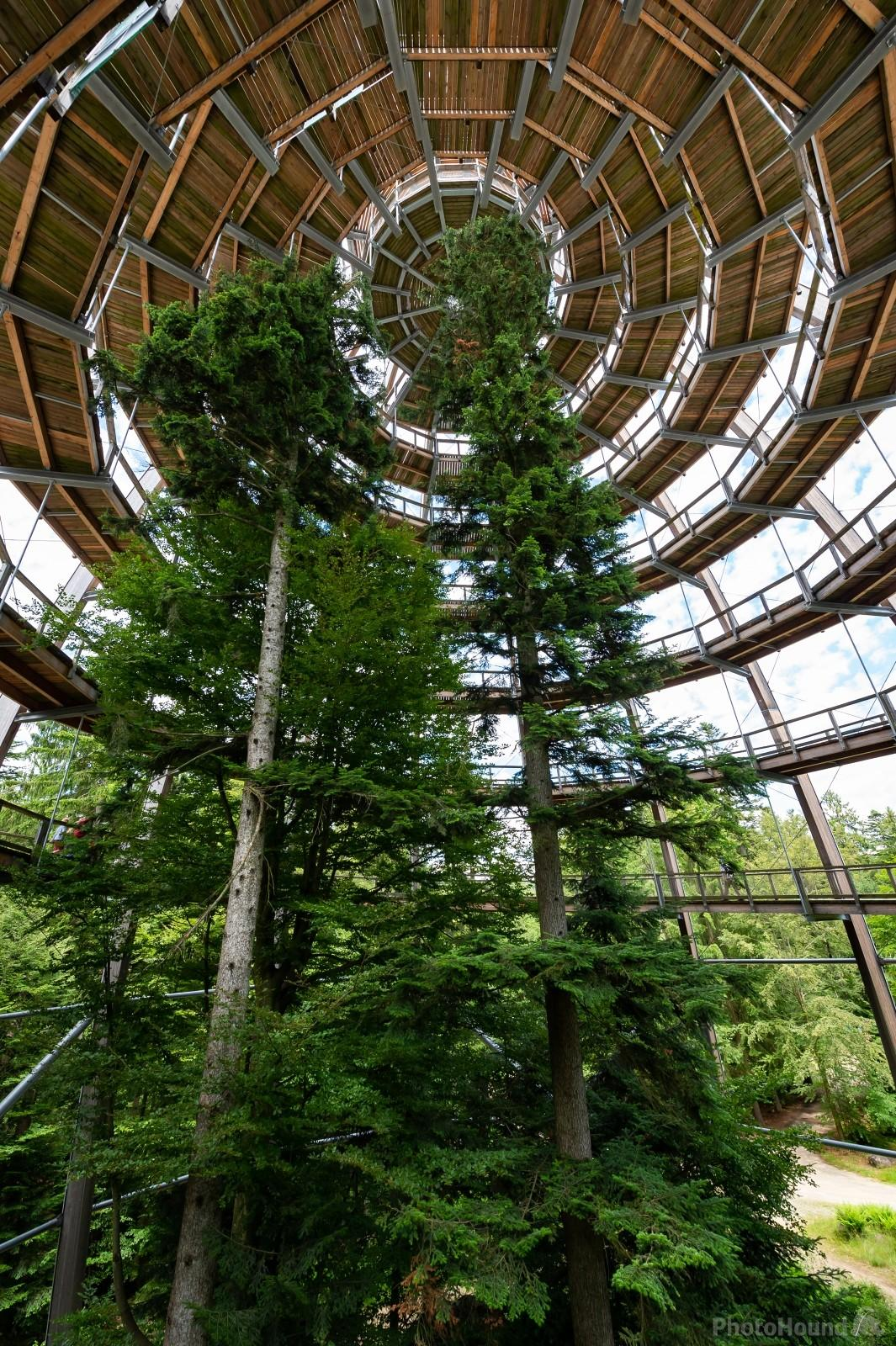 Interior of the observation tower of the Treetop Walk Bayerischer Wald