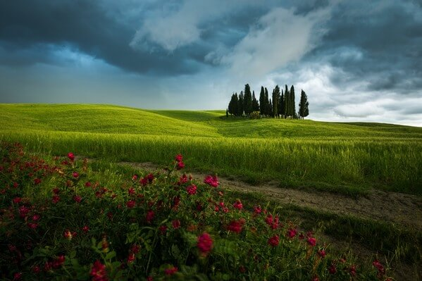 Cypress grove by San Quirico d'Orcia during cloudy day