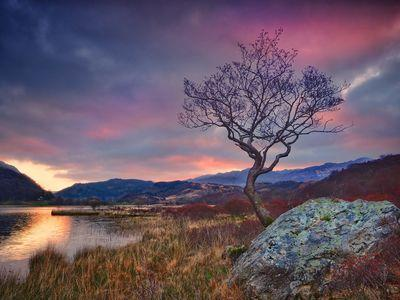 A lone tree at Llyn Dinas at sunrise