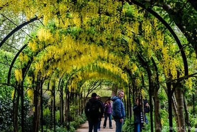 images of London - Royal Botanic Gardens Kew