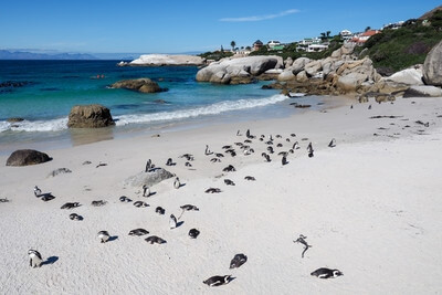 photography locations in South Africa - Boulders Penguin Colony
