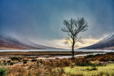 images of Glencoe, Scotland - Lone Tree at Loch Etive