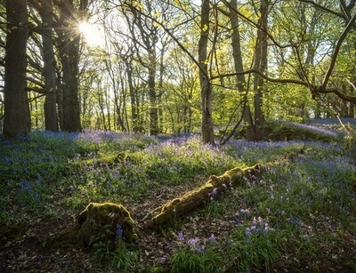 photo spots in England - Middleton Woods