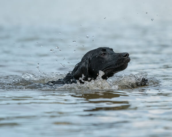 A dog swimming in the lake