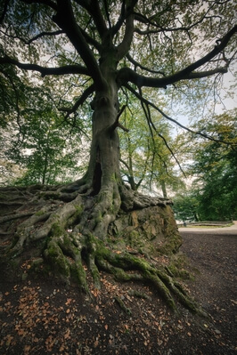 pictures of South Wales - Gnoll Country Park