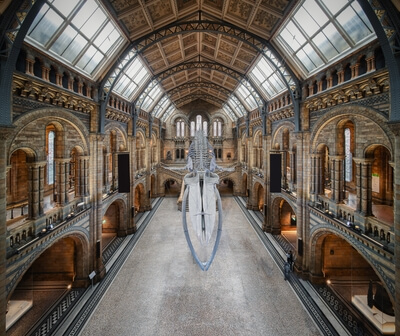 pictures of London - Natural History Museum