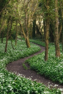 South Wales photography locations - Stackpole Wild Garlic Wood