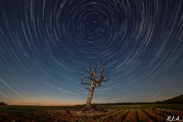 Star Trails centred around the Lone Tree at Tarrant Monkton