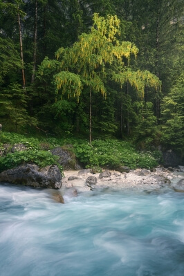 pictures of Triglav National Park - Zadnjica Valley
