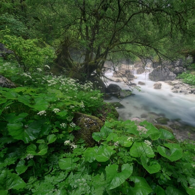 photos of Triglav National Park - Zadnjica Valley