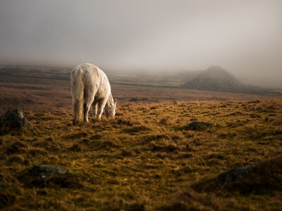 Dartmoor photography guide - King's Tor