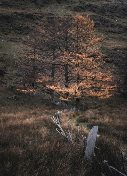 Cwmorthin old hut trees