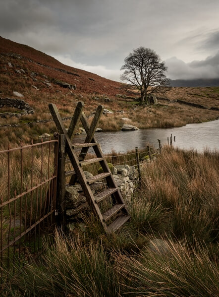 Stile and the lone tree