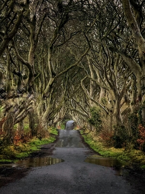 The Dark Hedges as seen in GoT season 2, episode 1: The North Remembers
