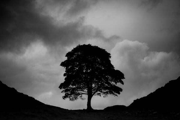 Hadrian's Wall: Sycamore Gap in Black and White on a stormy day
