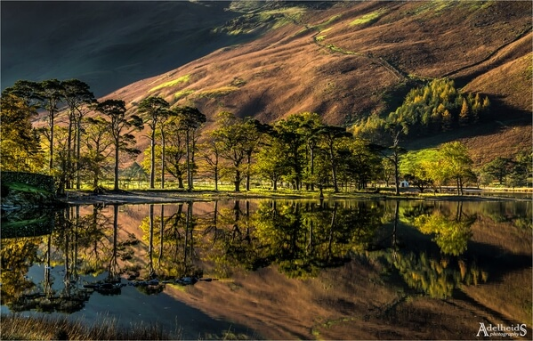 A close up of the famous Buttermere pines.