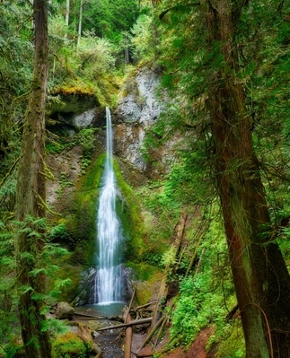 images of Olympic National Park - Marymere Falls and Lake Crescent