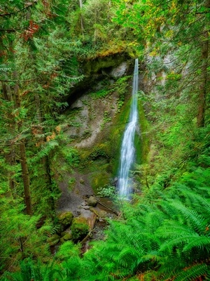 pictures of Olympic National Park - Marymere Falls and Lake Crescent