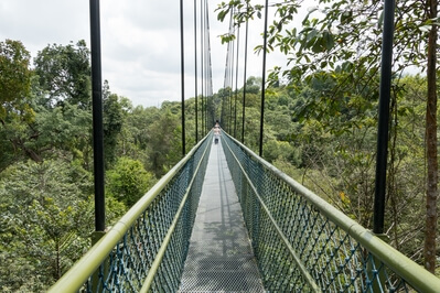 Photographing Singapore - MacRitchie Trails