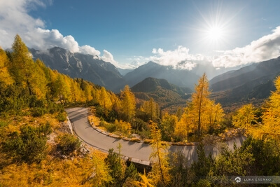 photo spots in Triglav National Park - Alpine Road & Larch Trees